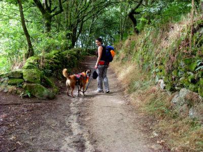 perro-camino-santiago