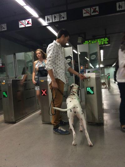 dalmata-en-el-metro
