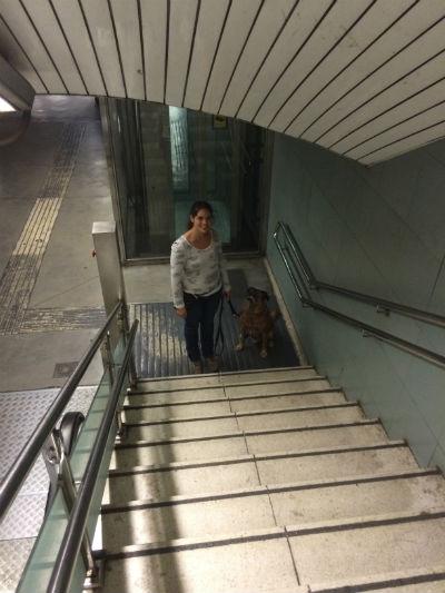 escaleras-perro