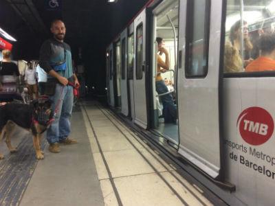perro-grande-metro
