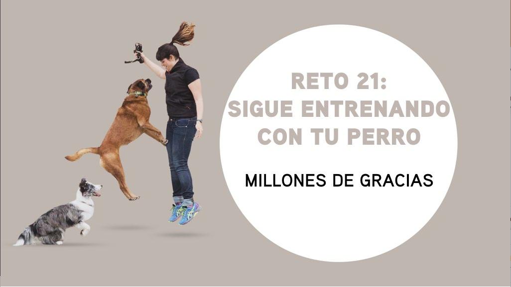 RETO 21: Sigue entrenando con tu perro