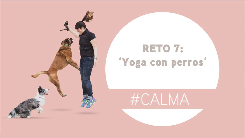 Reto 7: Doga (yoga con perros) dogminguero