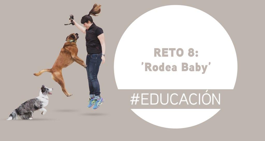 Reto 8: Rodea baby