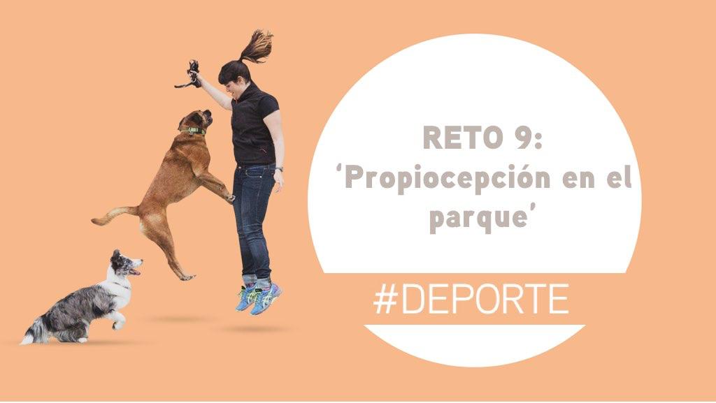 Reto 9: Propiocepción con tu perro en el parque
