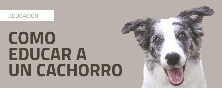 Cómo educar a un cachorro: 5 consejos prácticos