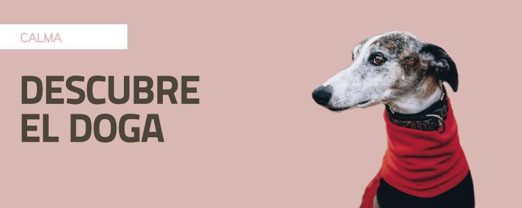 Descubre el Doga® (Yoga para perros)