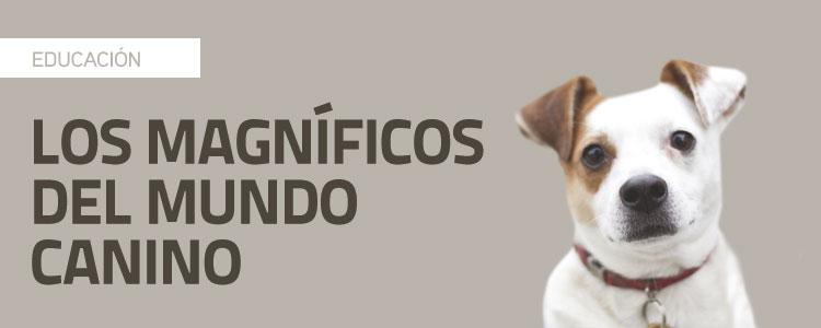 Descubre a los magníficos del mundo canino  (1/2)