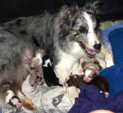 Madre con sus cachorros pat - Comida para cachorros de un mes ...