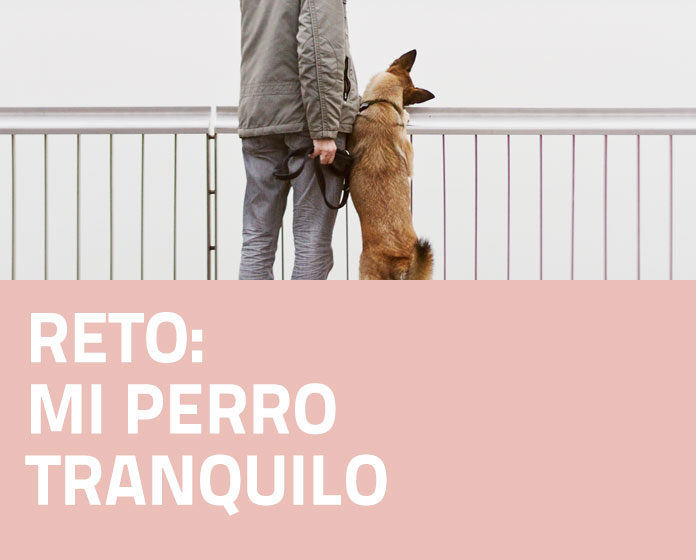 RETO 4 PERRO TRANQUILO: JUEGO DE OLFATO