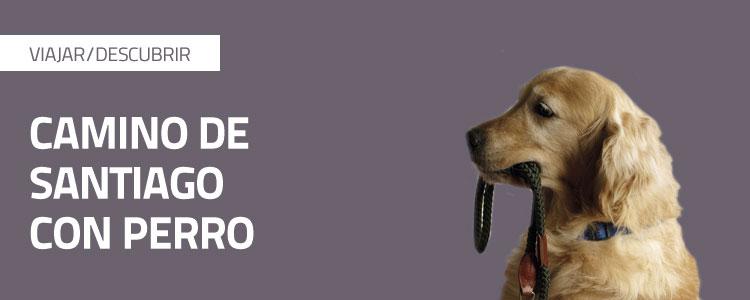 Los ojos del perro siberiano online dating