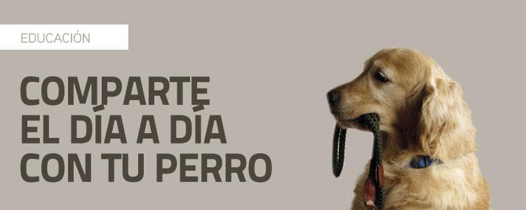 Comparte el día a día con tu perro