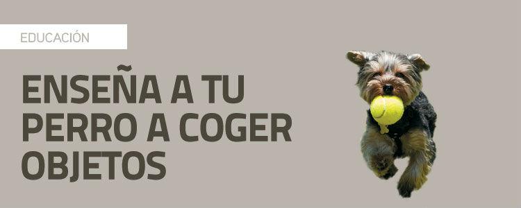 Enseña a tu perro a coger objetos 2: comando coge