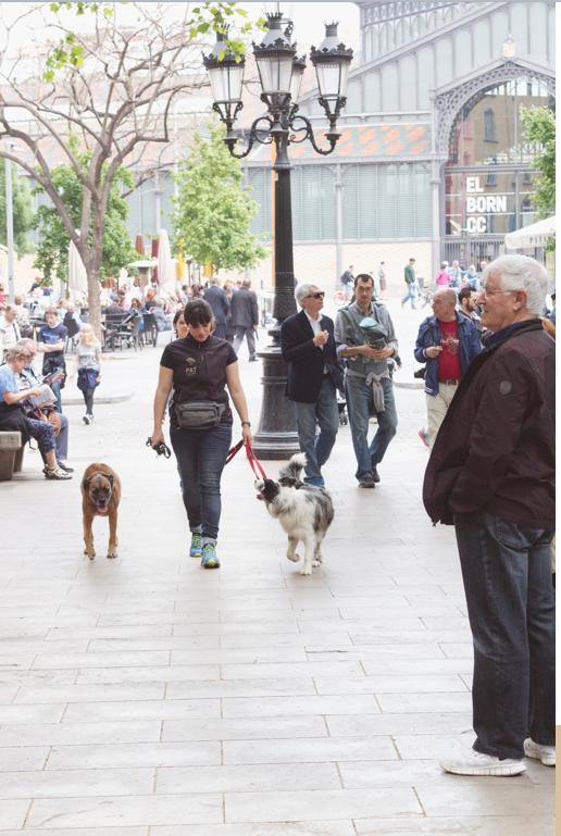 pasear-perro-barcelona