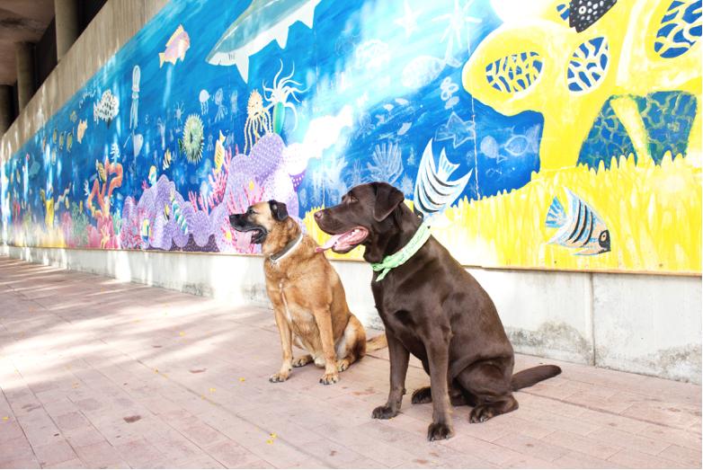 perros-en-la-ciudad