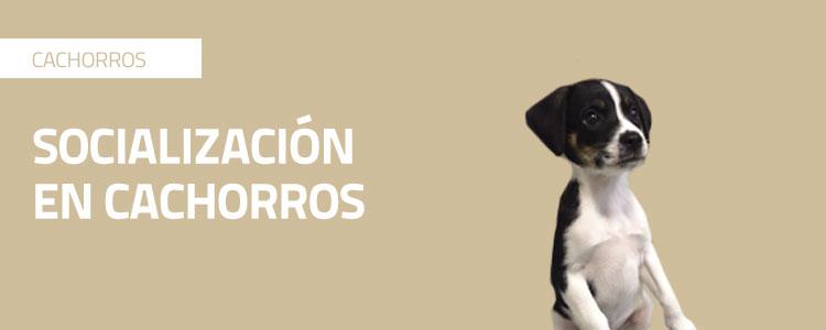 Consejos para socializar a tu cachorro o perro  correctamente