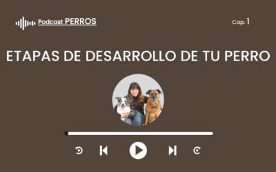 Capítulo 1. Etapas de desarrollo de tu perro