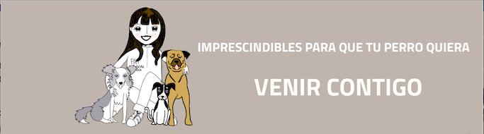 [infografía] Qué tener en cuenta para que tu perro venga contigo