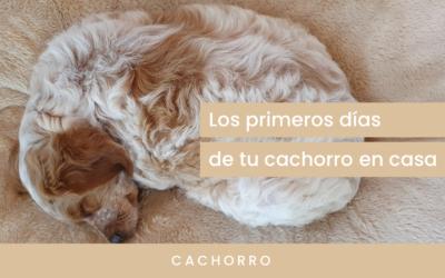Los primeros días de tu perro o cachorro en casa