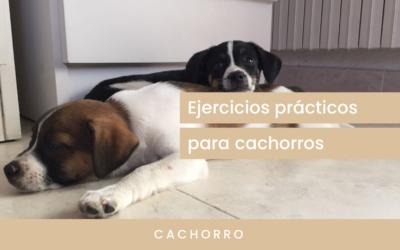 Ejercicios prácticos para cachorros
