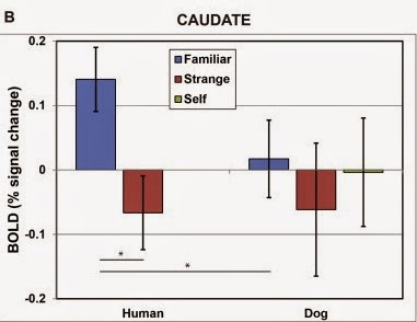gráfico estudio olfato en perros