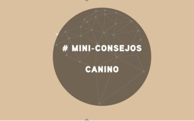 MINI CONSEJOS CANINOS DE MAYO