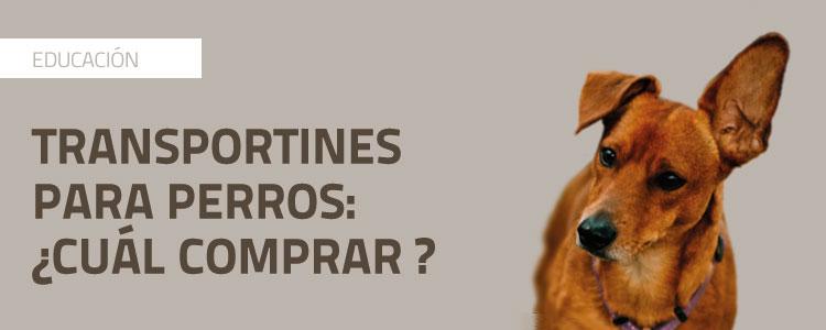 Transportín Pat Para Comprar– Comprar– Perros¿cuál Perros¿cuál Pat Transportín Para OPuTXZik