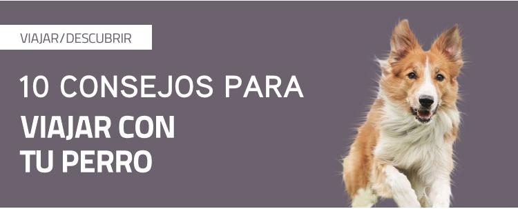 10 consejos para viajar con tu perro