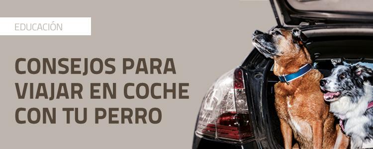 CONSEJOS PARA VIAJAR EN COCHE CON PERRO