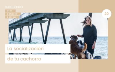 Mini- consejo canino 20 : Socialización