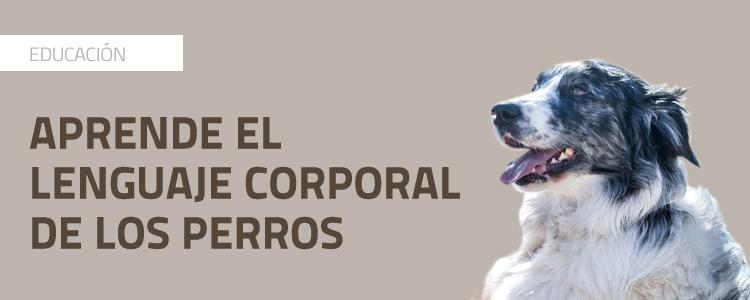 Aprende el lenguaje corporal de los perros (con vídeo)