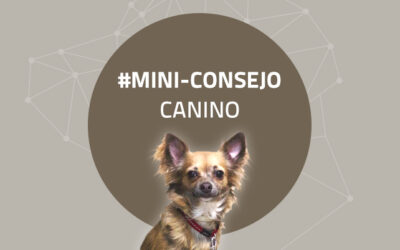 Mini-consejo canino 60: Convivir vs saludar