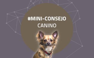 Mini-consejo canino 39: Vete al campo con tu perro, leche!