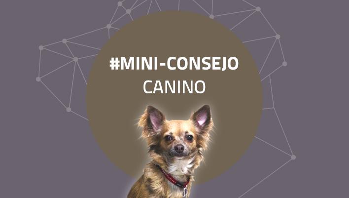 Mini-consejo canino 46: Descubre una ciudad con tu perro