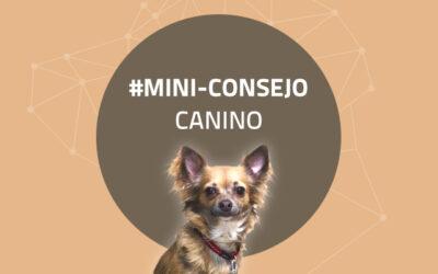 Mini-consejo canino 56: La importancia de soltar