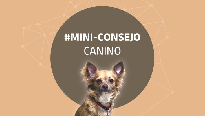 Mini-consejo canino 63: No pienses tanto, actúa