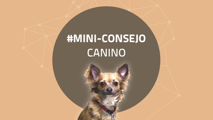 Mini-consejo canino 48: Juega con tu perro cada día