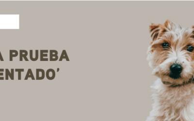 Pon a prueba el 'sienta' de tu perro