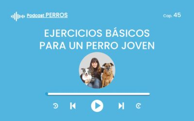 Capítulo 45. Ejercicios básicos para un perro joven