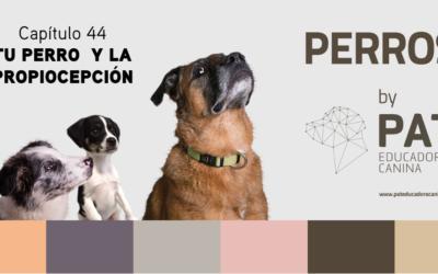 Capítulo 44. Tu perro y la propiocepción