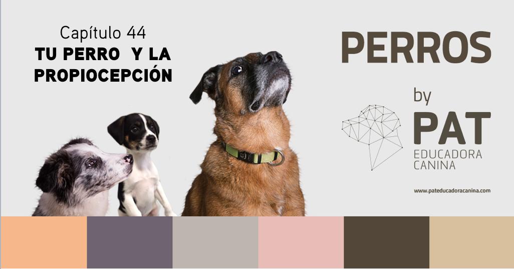 Capítulo 44. La propiocepción y tu perro