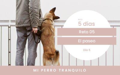 Reto 5. El paseo