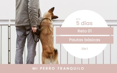 Reto 1. Pautas básicas para conseguir la calma en tu perro