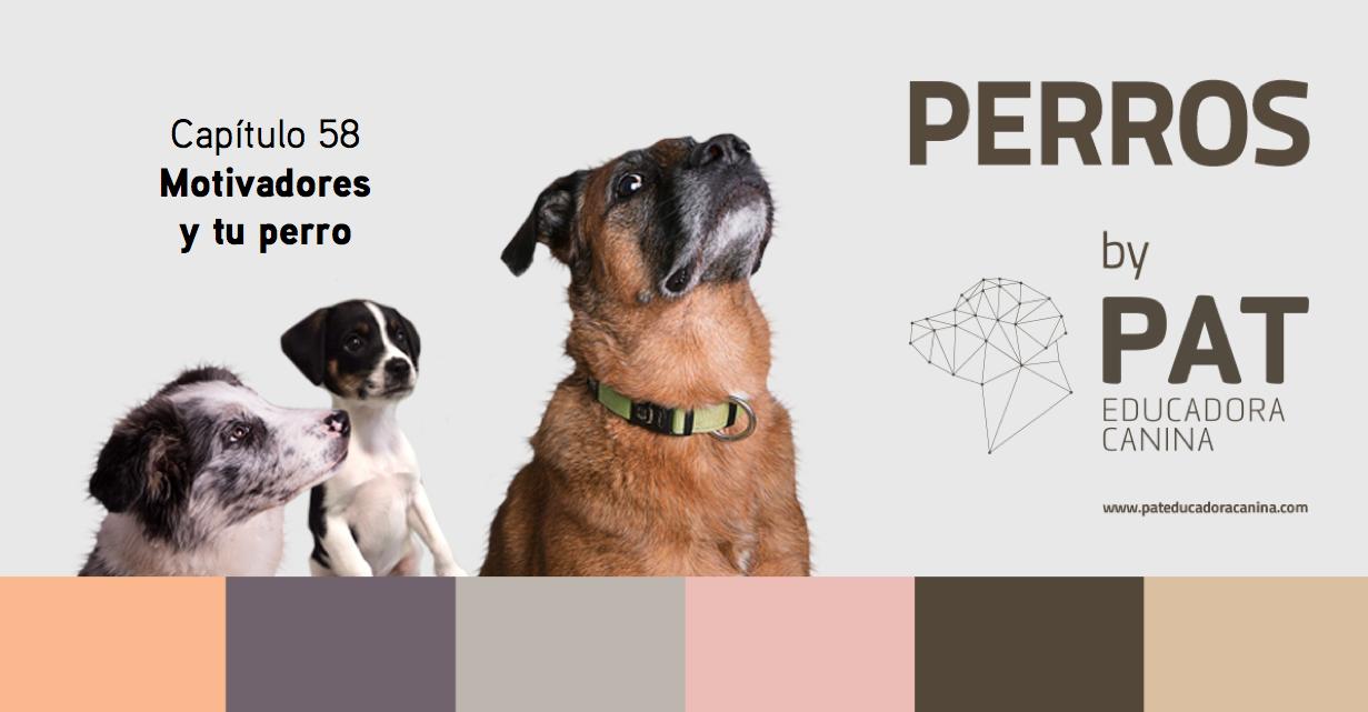 Capítulo 58. Motivadores y tu perro