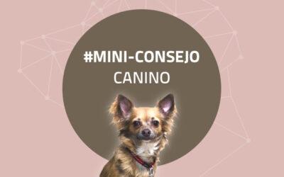 Mini-consejo canino 52: Descansa física y mentalmente con tu perro