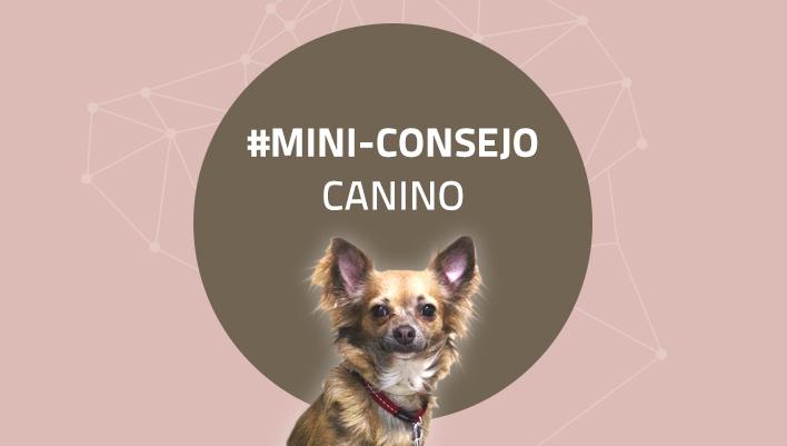 Mini-consejo canino 66: Caricias en la calle