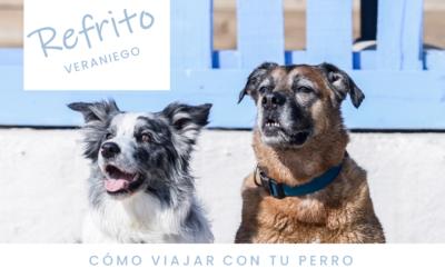 [REFRITO Veraniego] Cómo VIAJAR con tu perro (o bienvenidas vacaciones!)