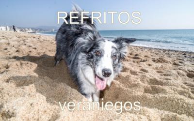 REFRITO veraniego 4: Cómo VIAJAR con tu perro (o bienvenidas vacaciones!)