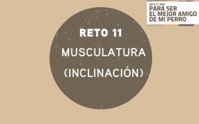 RETO 11: MUSCULATURA