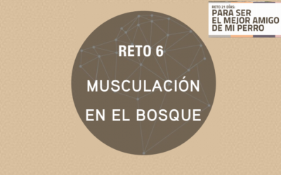 RETO 6: MUSCULACIÓN EN EL BOSQUE