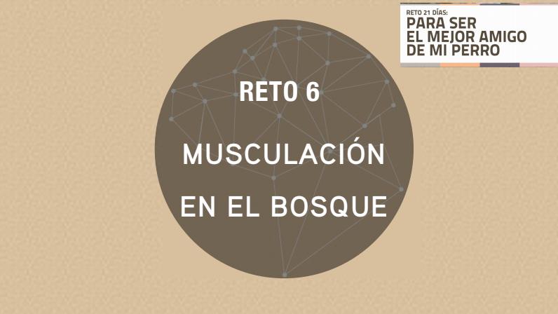 RETO 6: MUSCULACIÓN EN EL BOSQUE (2018)